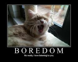 Cat yawning-boredom words